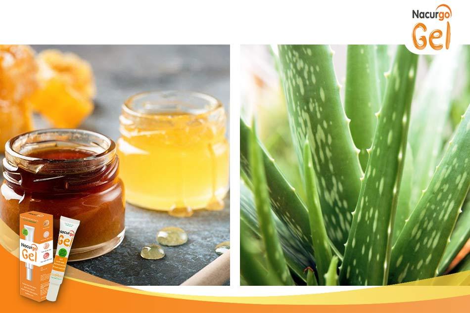 Các bước dùng mật ong, nha đam trị mụn cám tại nhà